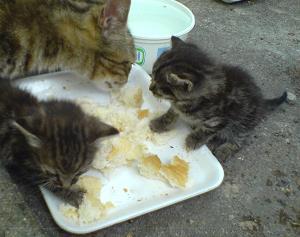 развитие на малки котета