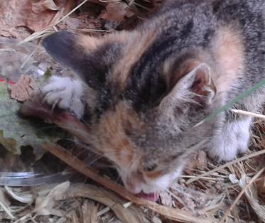 Грижи за устната хигиена на котки